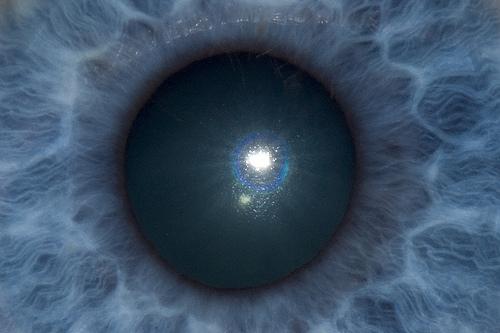 The Eye's Mind